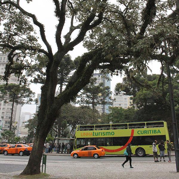 Ipê amarelo, ao lado do ponto de ônibus (Fotos Panorama do Turismo)