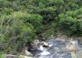 Natureza protegida no Parque do Cerrado