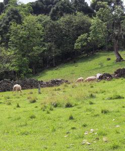 Na área rural, antigos muros de pedra