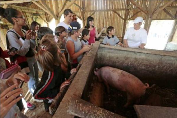 Coluna Volta ao Mundo: Aulas de vida rural para os pequenos (Foto divulgação)