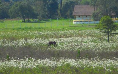 Em São Luiz do Purunã, saudação à primavera