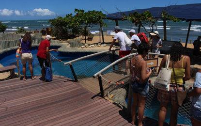 Projeto Tamar, atração na Praia do Forte