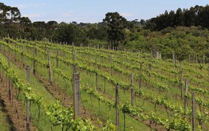 Passeio na vinícola é um programa legal