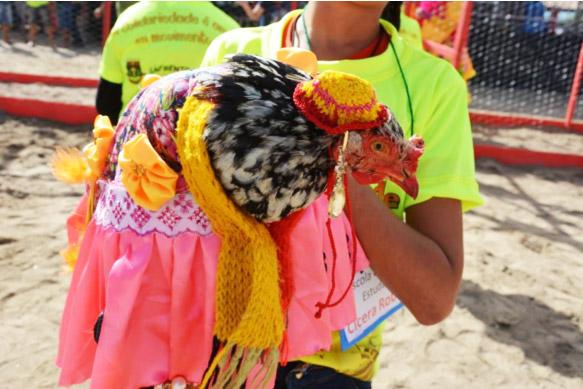Coluna Volta ao Mundo por Nelci Seibel: As galinhas competidoras da corrida usam trajes de festa