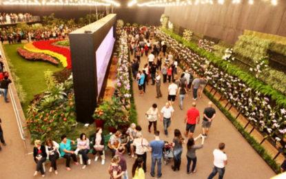 Festa das Flores, Bolshoi e Celesc juntas, Alpen Park e mais