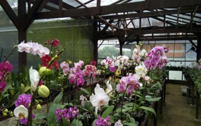 Concurso de orquídeas, feira do vinho e Unipraias