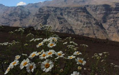 Valle Nevado recebeu 300.000 visitantes
