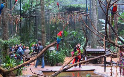 Encantamento e interação no Parque das Aves