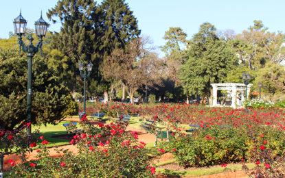O belo roseiral de Palermo
