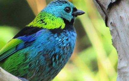 Projeto prevê incentivo à observação de aves