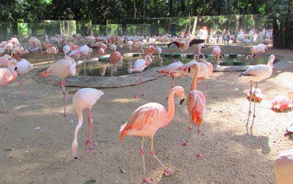 No mundo das aves, contemplação e proteção